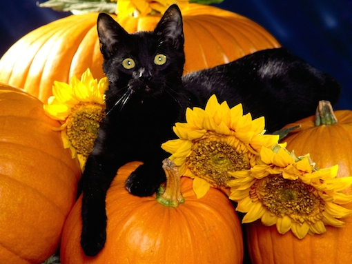 Playful-Pets-halloween-25517126-1280-960